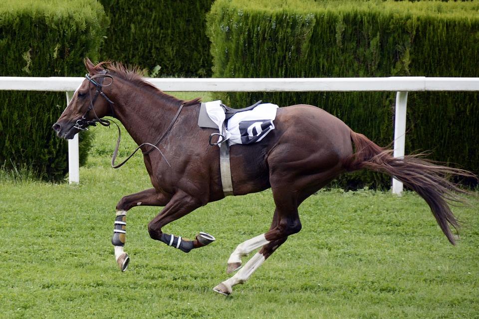 risarcimento danno del cavaliere del circolo sportivo equestre