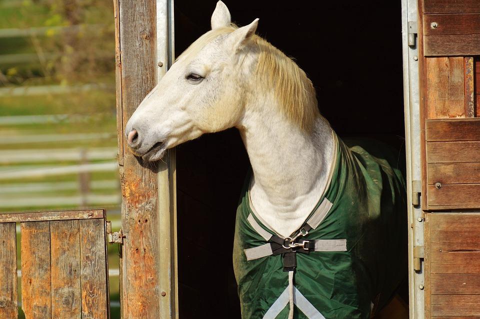 contratto di pensionamento cavalli